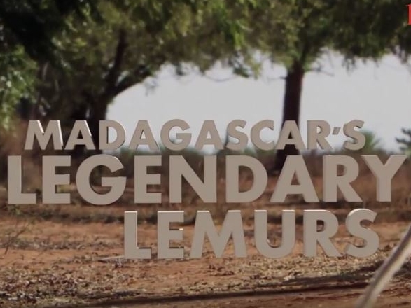 Madagascars_legendary_lemurs.JPG
