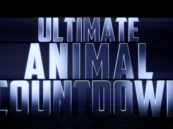 ultimate animal countdown.jpg