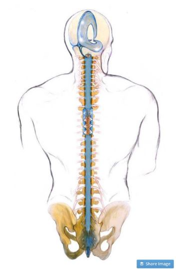 Craniosacral Therapy, Lymph Drainage, Tapping — Center for ...