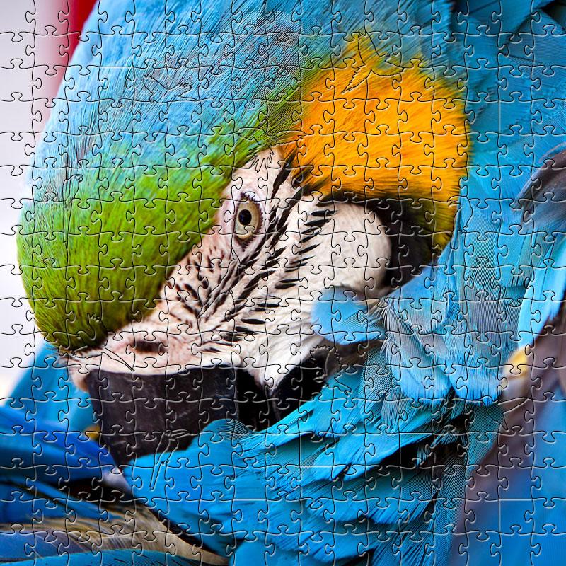 Zen Puzzle, Blue Parrot Large