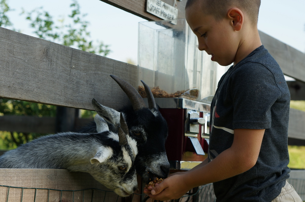 Goats ECO Center Fall Festival Petting Zoo