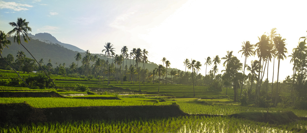 Rice Fields in Balbagon / Mambajao