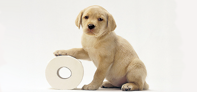 puppy toilet roll