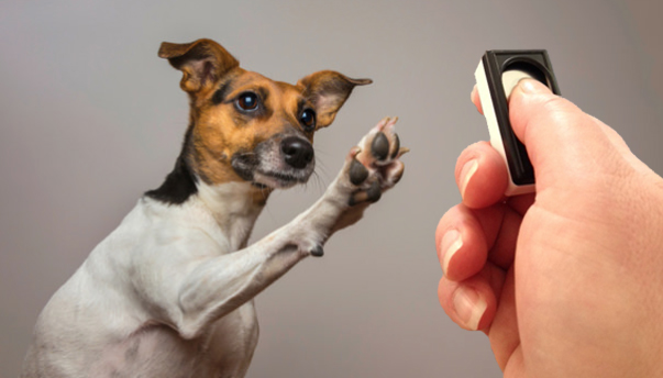 How To Do Clicker Training For Dogs