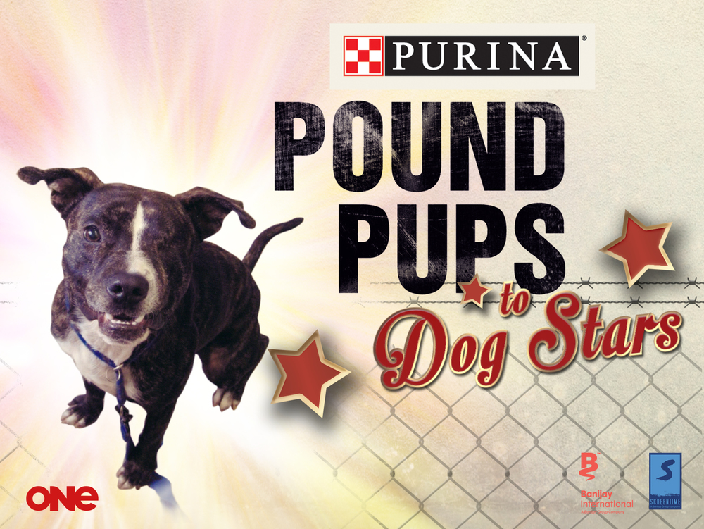 Pound Pups for AOQ.jpg