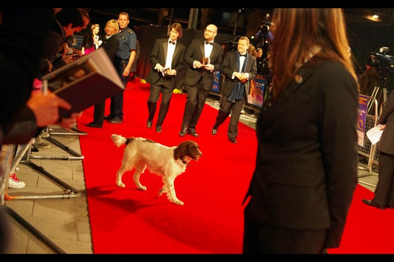 Another quick go-through from a sniffer dog, the police presence increases steadily for fifteen minutes, and the red carpet is cleared. It's all going on.
