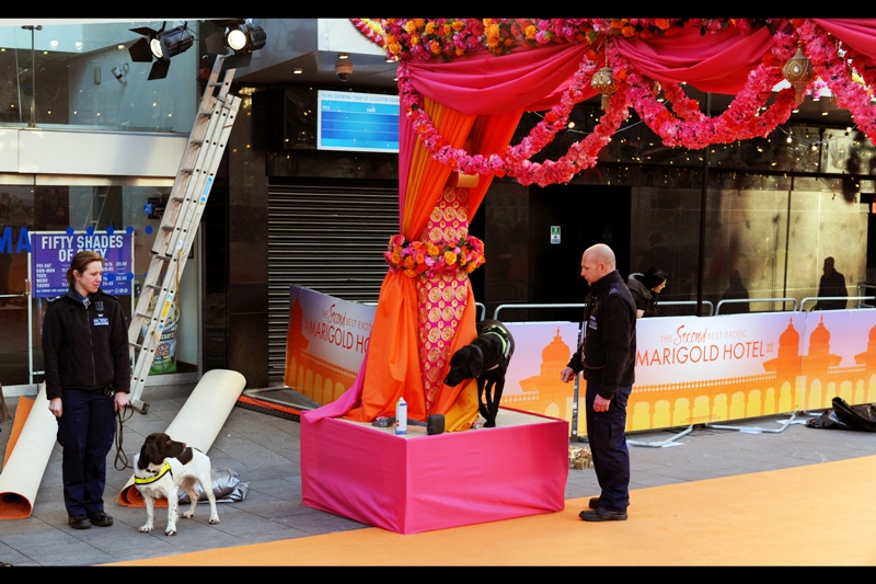 And since tonight's is a Royal World Premiere, there were not two but FIVE canine sniffer dogs cheerfully working the orange(ish) carpet. If you had any intention of subverting the line of royal succession in this country, your budget for doggie treats would need to have been astronomical. The dogs were very thorough (and friendly)