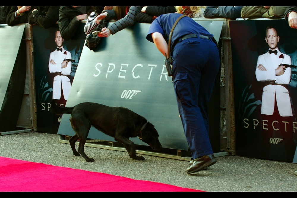A few hours earlier... sniffer dogs on the red carpet. Security for a royal visit tends to be high. I even got pleasantly chatted to by one of the royal security guards... probably because almost nobody knows that Pentax is a real brand of camera and he felt it looked highly suspicious. Even (or especially) with a Nikon alongside it....
