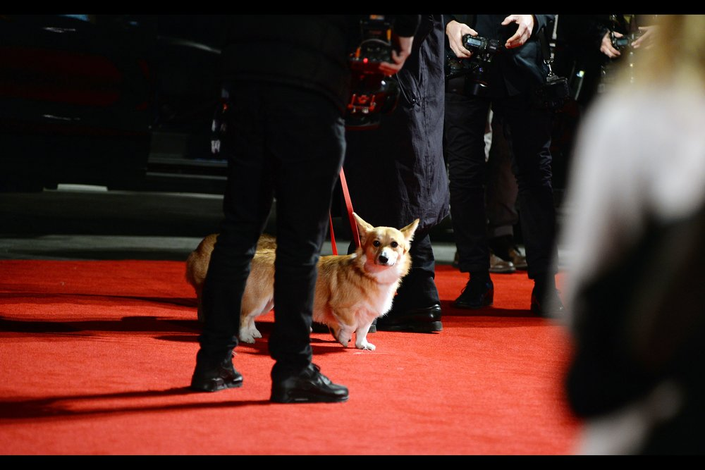 "The fine folks at wireimage.com, who I use primarily to help me identify people I photograph that look famous, offered that the corgis at the event were ""Royal Corgis"", but I don't know what that means. They were well-behaved and didn't crap on the carpet, at least."