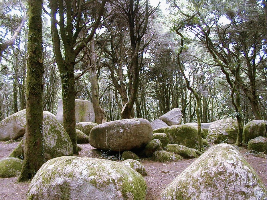 Sintra forests (5).jpg