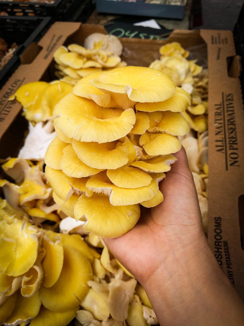 Oyster Mushroom BLOG.jpg