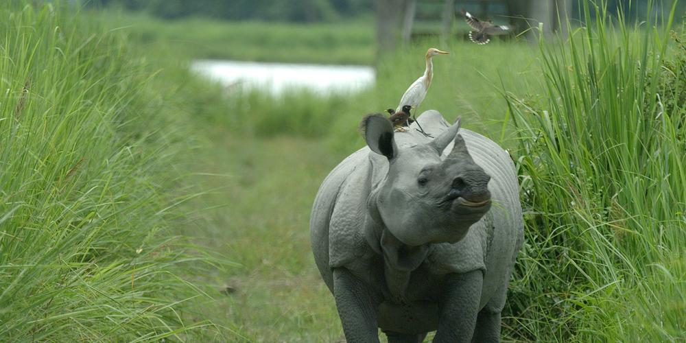 39 01594520_Rhino.jpg