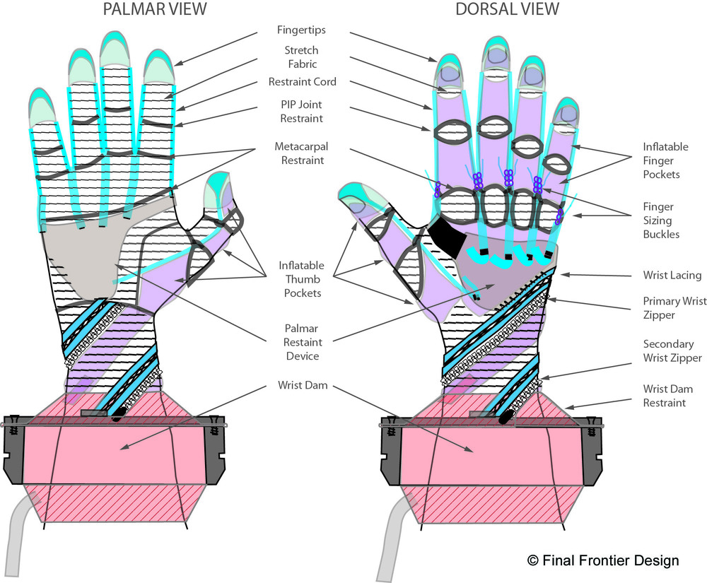 FFD - MCP Glove Diagram.jpg