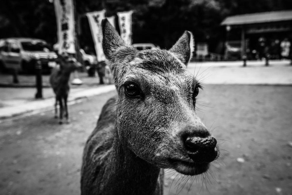 Nara 2017 #2