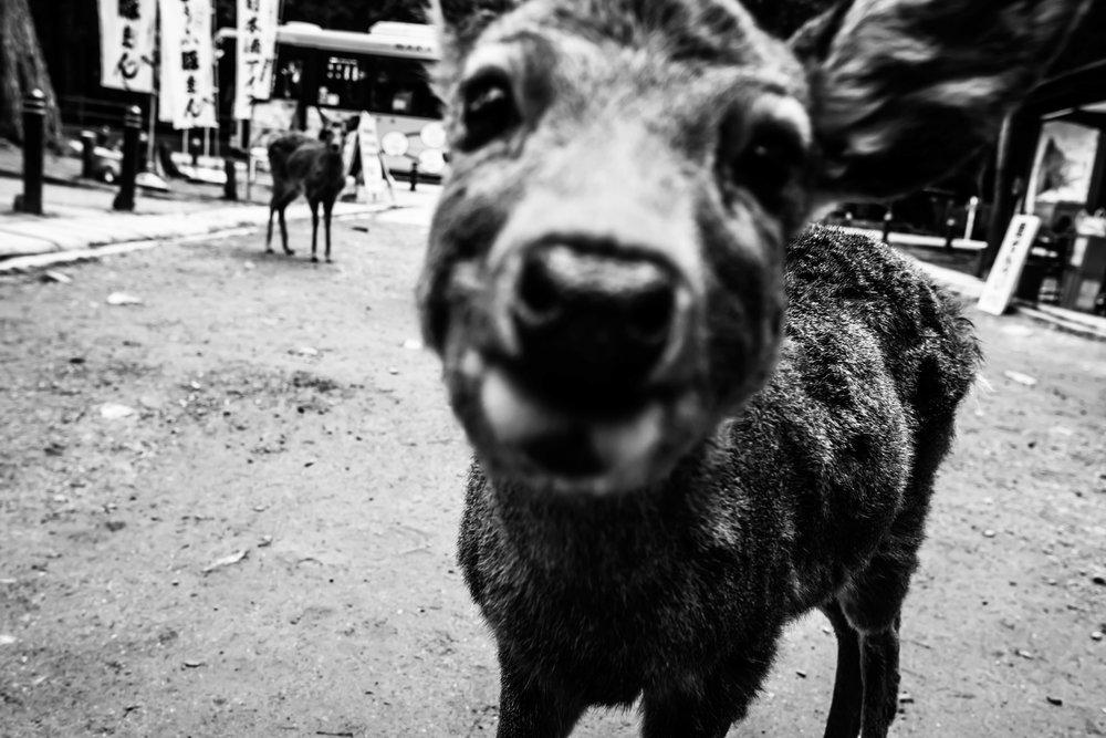 Nara -