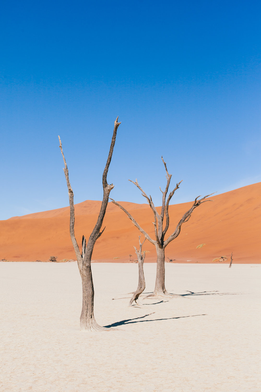 The remaining skeletons of  camel thorn trees , which are believed to have died 900 years ago. The intense sun has scorched them black, and because it is so dry the wood doesn't decompose.