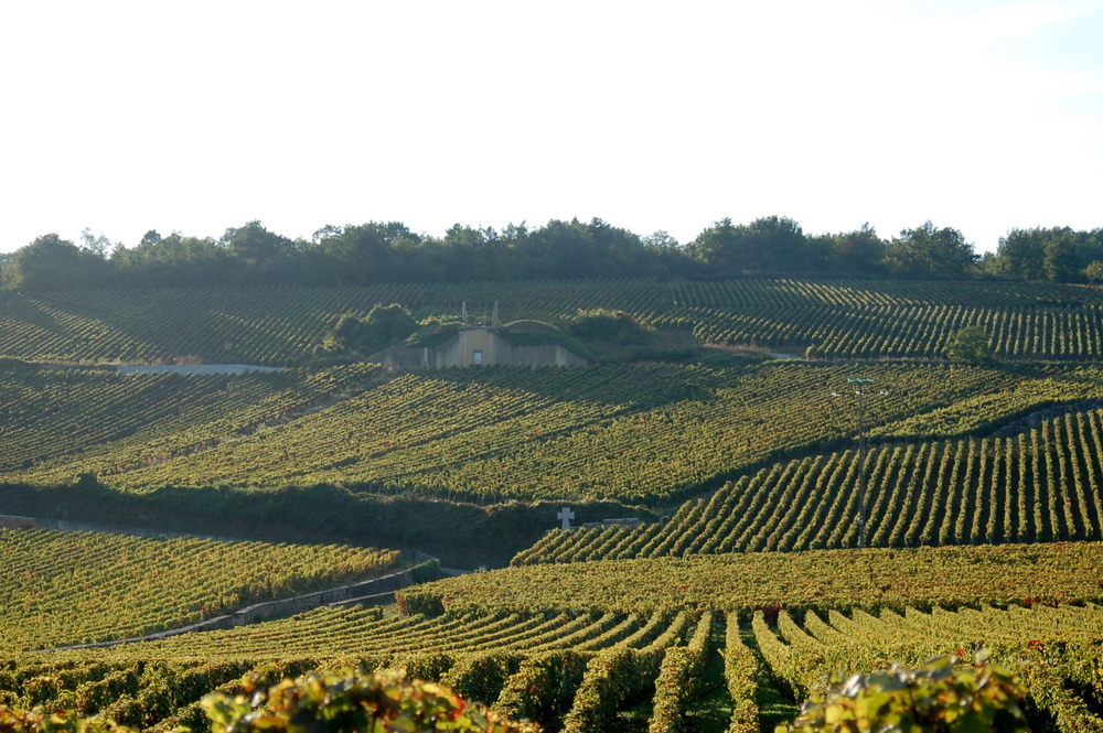 The famed vineyards of  Romanée-Conti  in Burgundy.