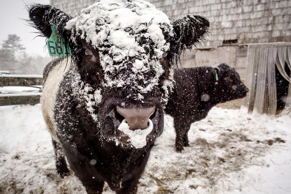 #1 - the bull