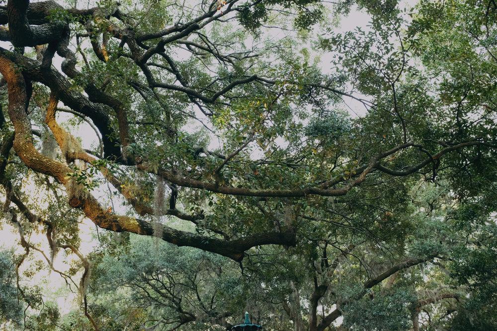 Spanis Moss, Savannah Georgia