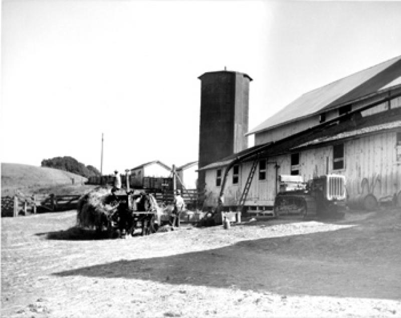 Bear Valley Dairy