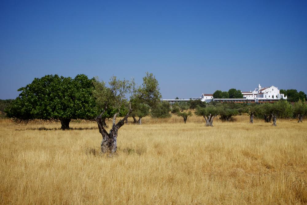 Convento-Do-Espinheiro-juillet-2013-12.jpg