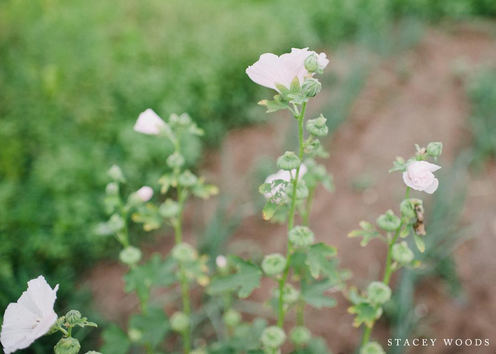 Momaw's flowers