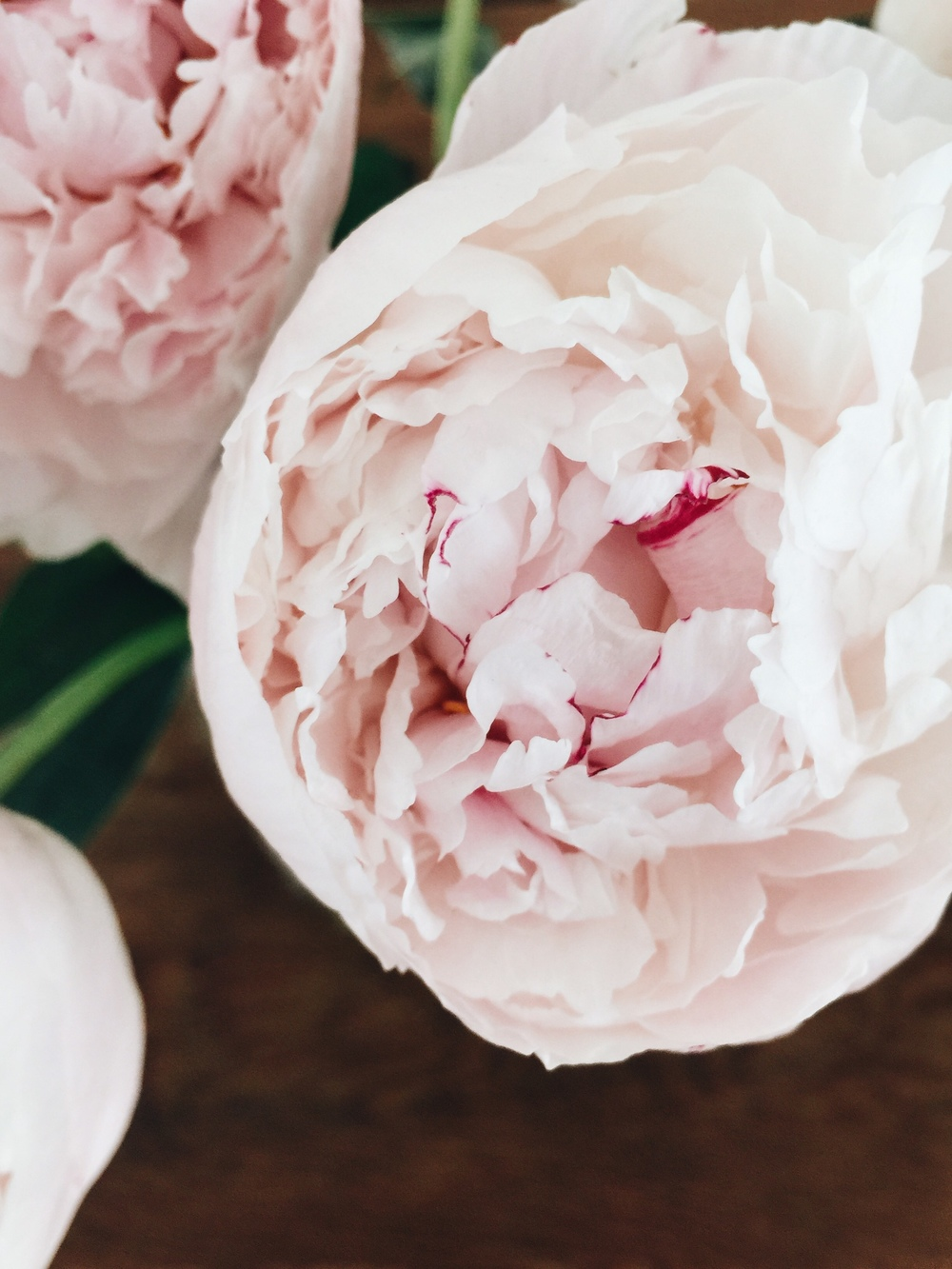 Stacey Woods, Peonies on iPhone