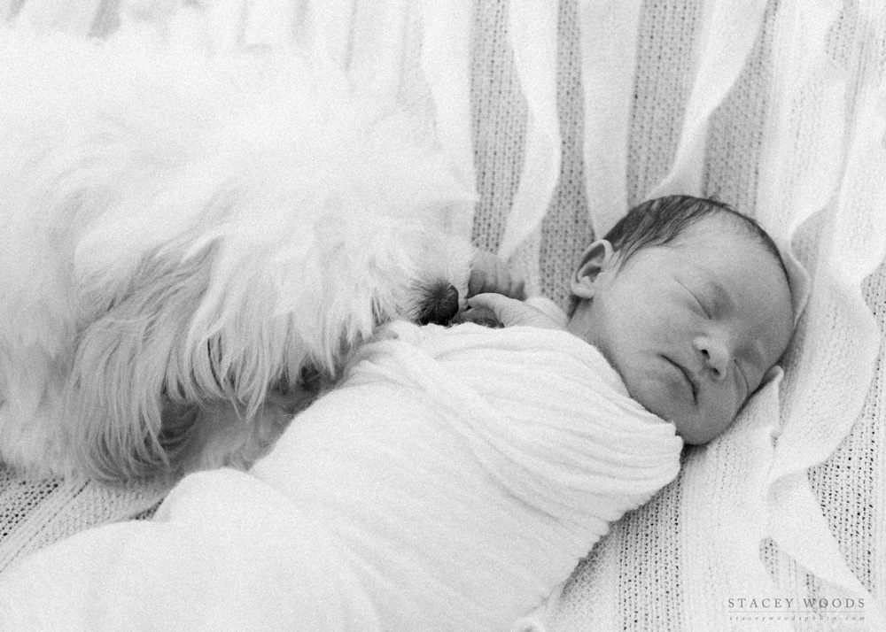 Newborn and Puppy, Stacey Woods Lifestyle Photographer