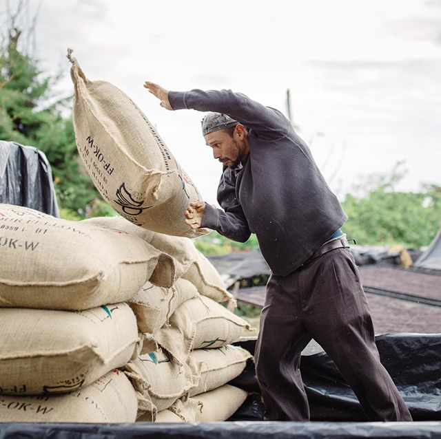 After all the hard work of harvesting at #lomalagloria  there is the hard work of loading. These guys throw the 150lb bags of coffee around like it's nothing. . . 📸@beaudoesgo @anny_ruth #coffee #coffeelove #coffeefarm #volcanocoffee #volcano #fortheloveofcoffee #travel #elsalvador #hardwork