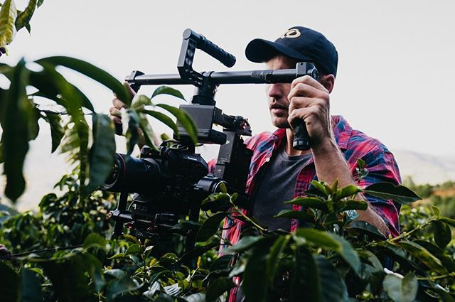 Yesterday our goal was to get up close with the coffee cherries. 🍒#tarrazuthefilm #tarrazu #coffee #coffeetree 📷@miahidema