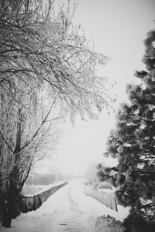 Jordan Edens Photographer_Tri Cities photographer_Family photographer_child photographer_lifestyle photographer_Kennewick family photographer_richland family photographer_families_babies_memories_3