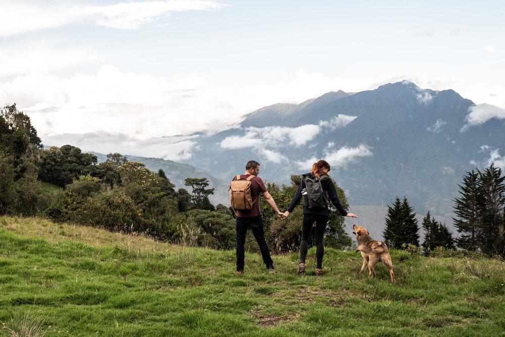 So many stray dogs in Ecuador.