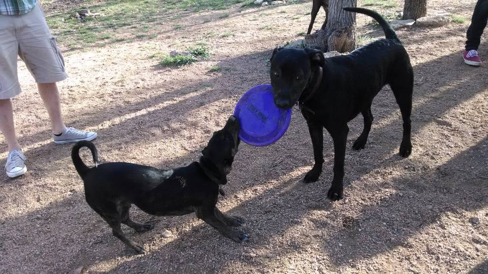 dogs & frisbees.jpg