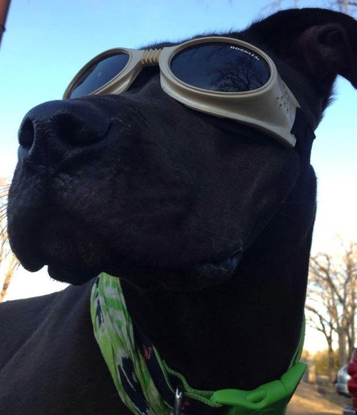 Dog with Goggles.jpg
