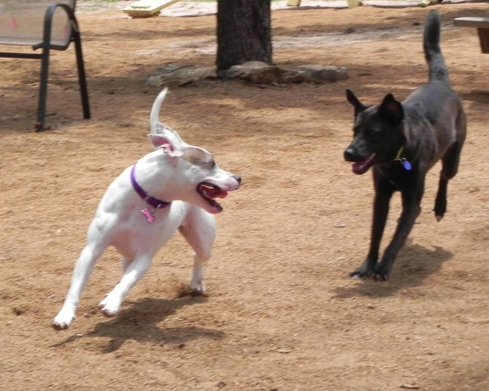 Park dogs.jpg