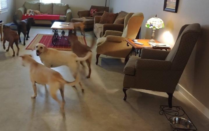 Dog Lounge Area
