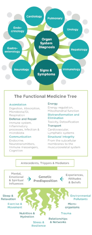 functional-medicine-brochure-tree.jpg