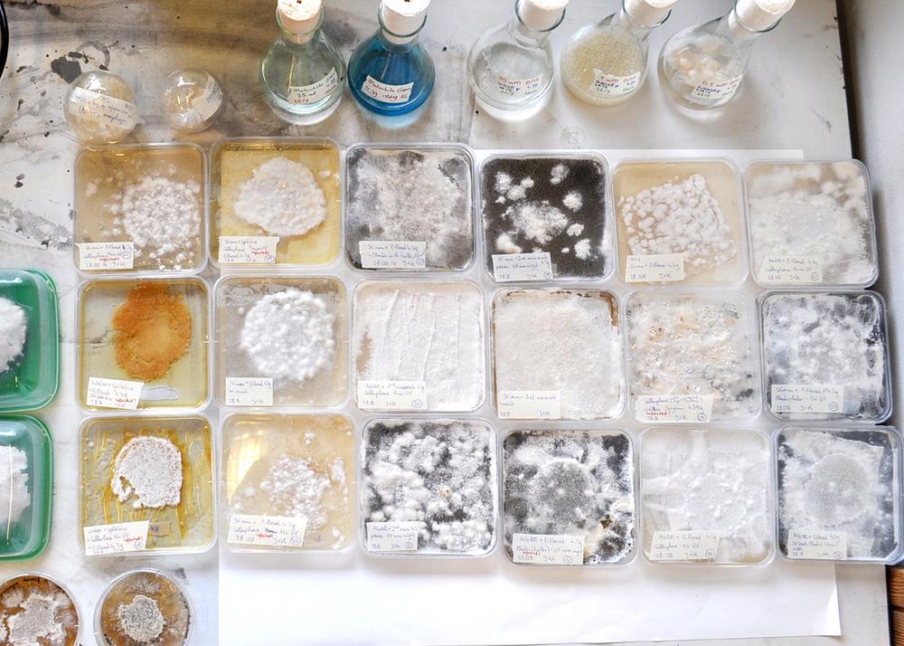 Elaborate experiments in the Utrecht University Lab