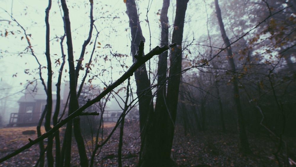 Mist in Autumn.