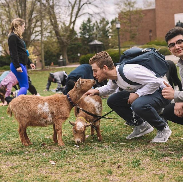 We hope you enjoyed Goat Yoga! Go check out our Facebook page for pictures from the event!
