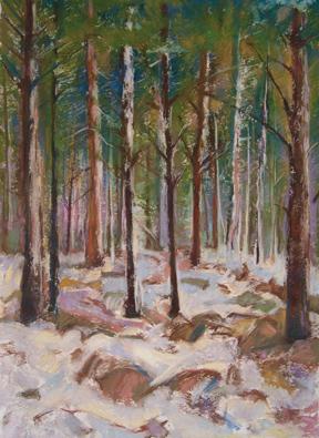 Winter in Pines