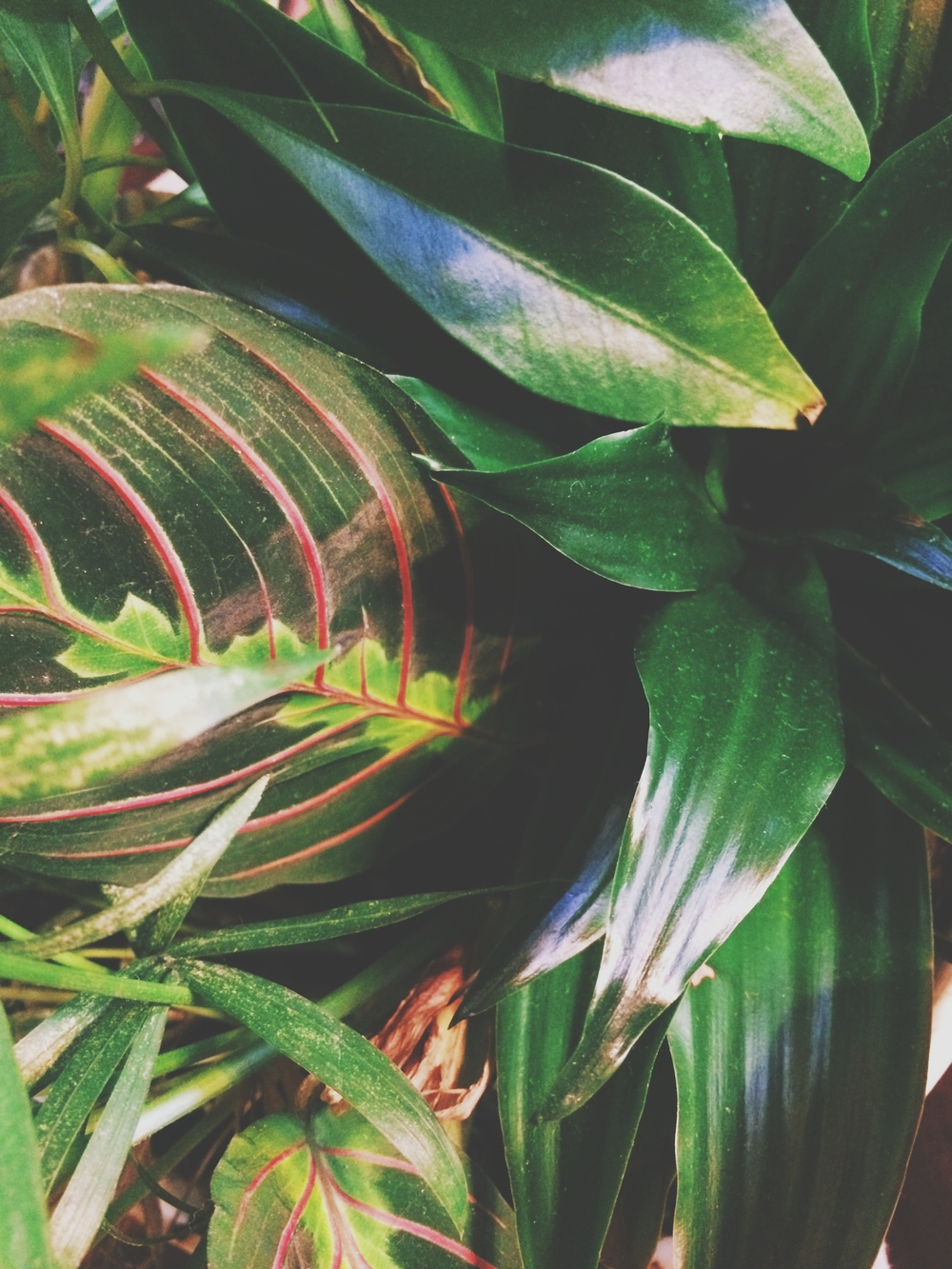 I was obsessed with the leaves with the red lines.