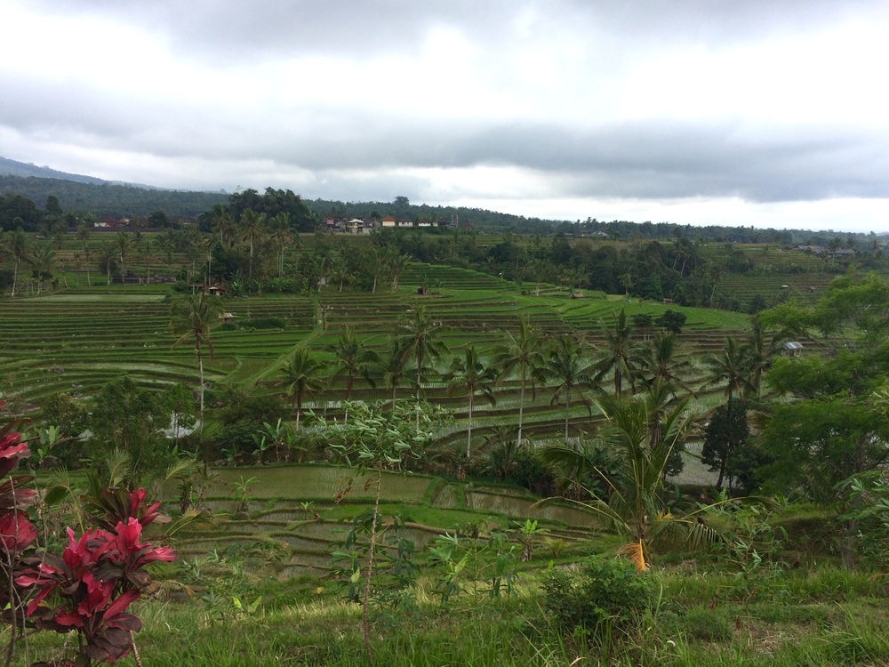 These rice paddies were breathtaking and stretched for miles :)