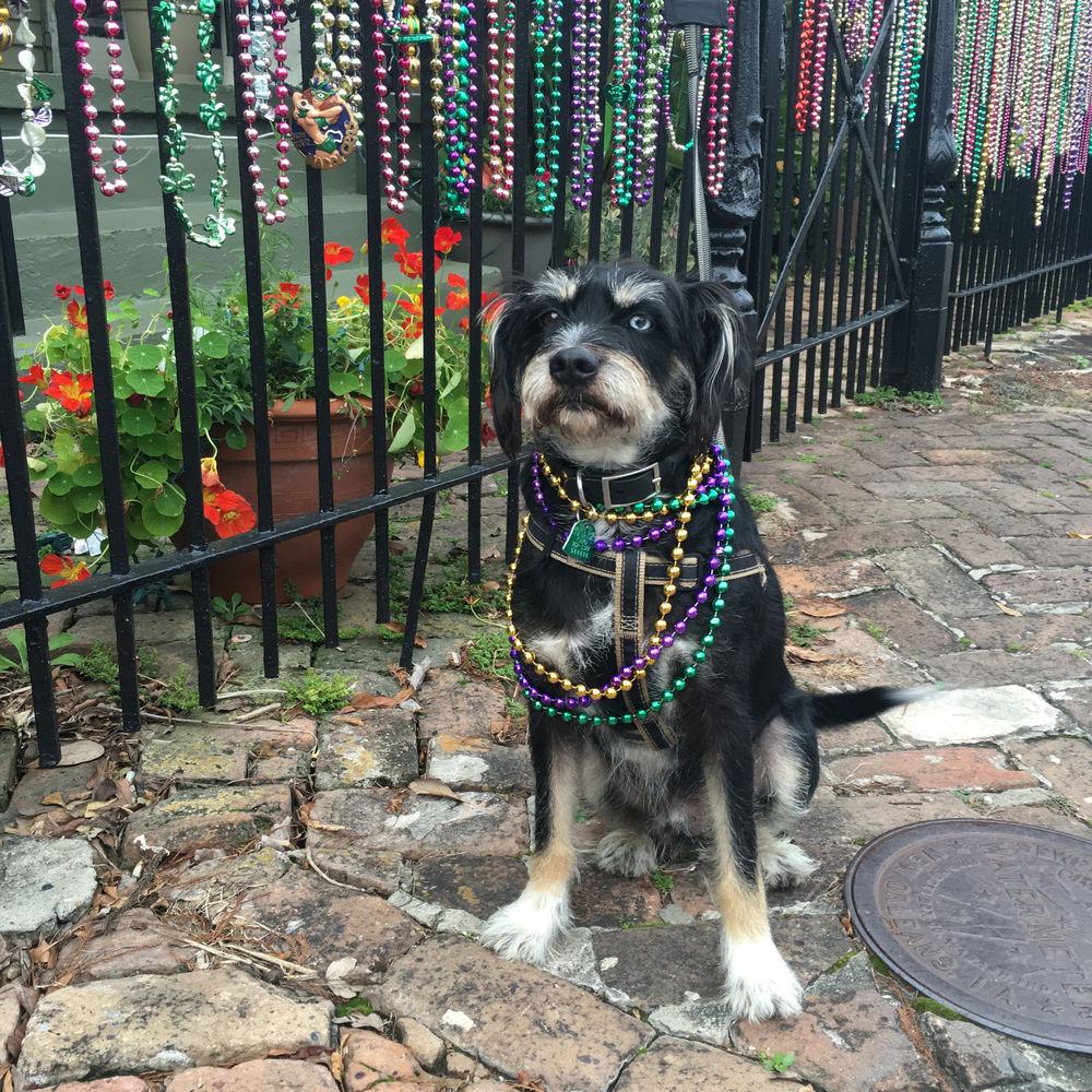 Happy Mardi Gras Everyone!