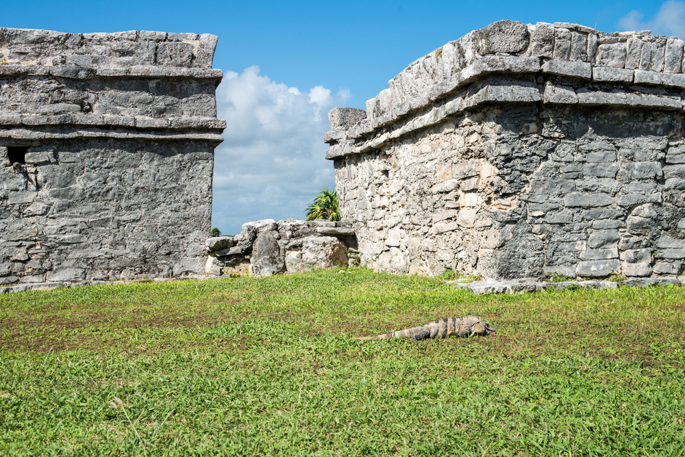 Pyramid Castillo's sea facing walls, +iguana