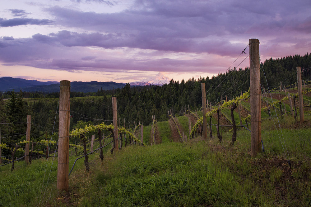 Phelps Creek Vineyard.jpg