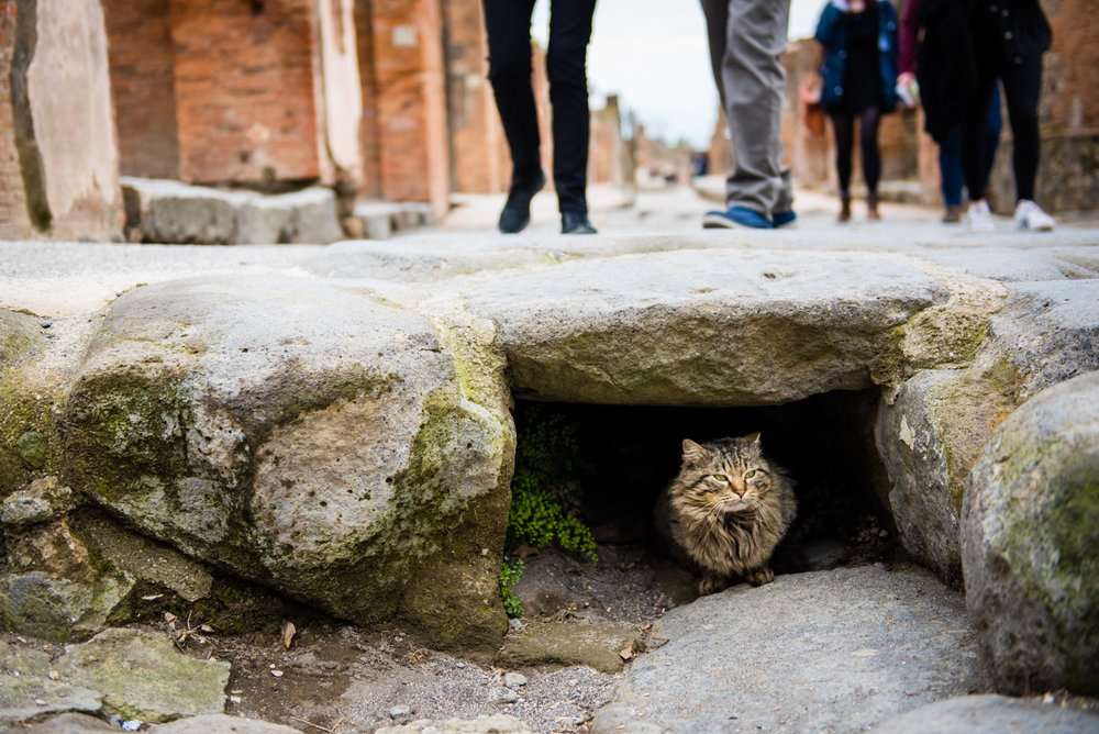 Cat of Pompeii.jpg