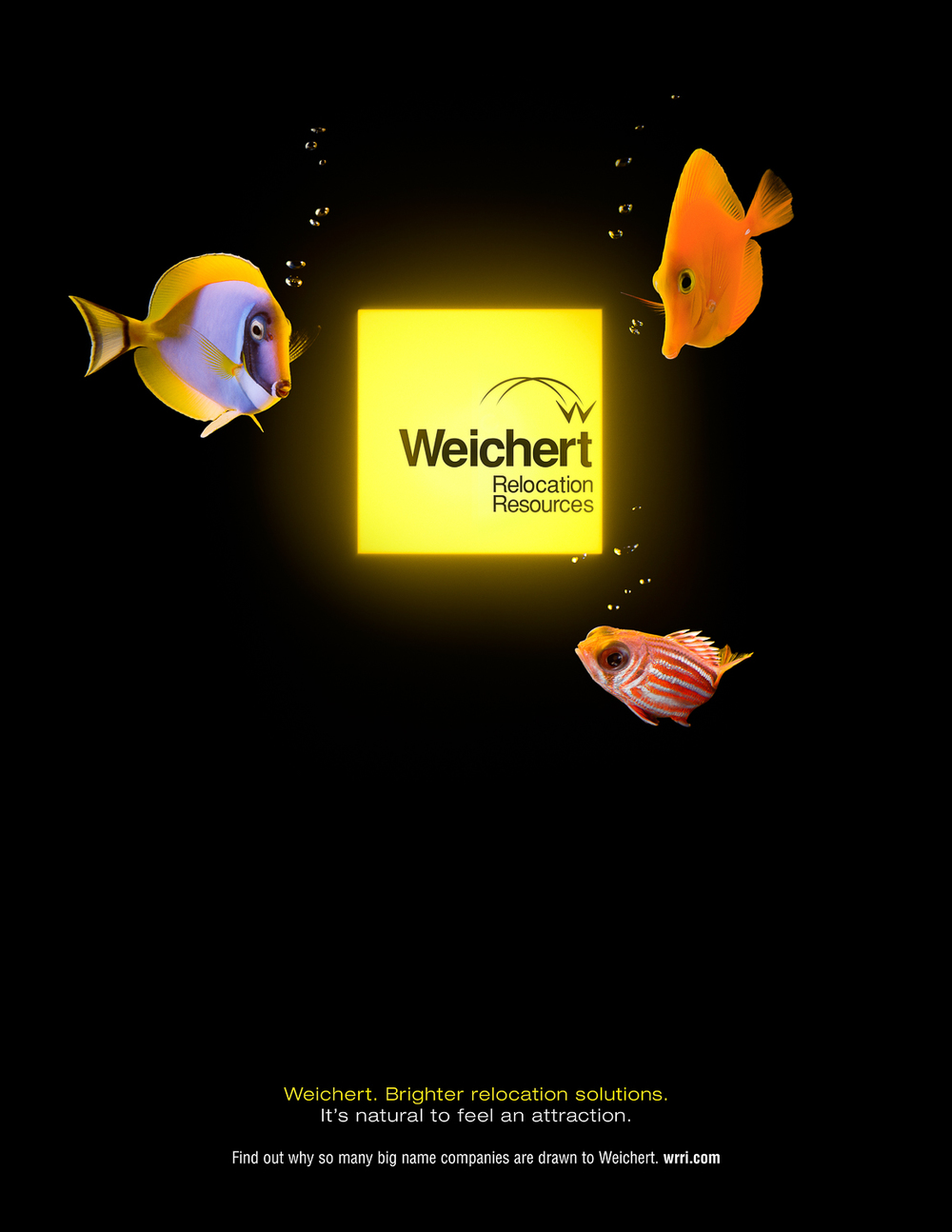 Weichert_Ad_Fish.jpg