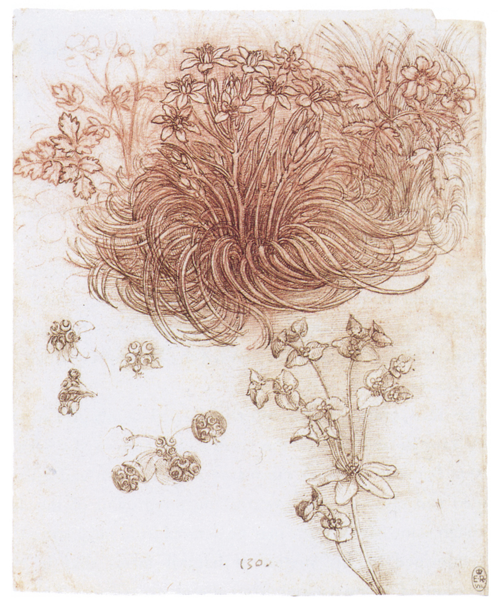 Leonardo da Vinci - Drawings - Plants - 02.JPG