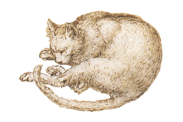 Leonardo da Vinci - Drawings - Animals - Cat - 01.JPG